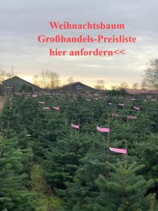 Weihnachtsbaum Preisliste: zum Weihnachtsbäume kaufen