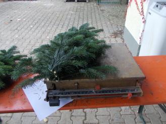 Sortenauswahl Schnittgrün 2019 bei Weihnachtsbäume Holstein Kg