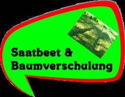 Fachinformation aus der Baumschule - Saatbeete und Baumverschulung von Weihnachtsbäumen