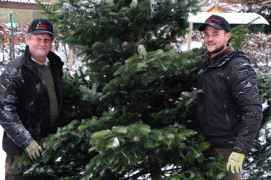 Weihnachtsbäume direkt beim Weihnachtsbaum Produzenten kaufen.