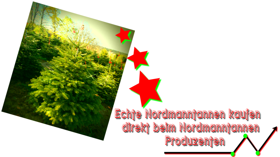 echte Tannenbäume aus gesunden, nordischen Plantagen vom Weihnachtsbaum Produzenten: Weihnachtsbäume Holstein