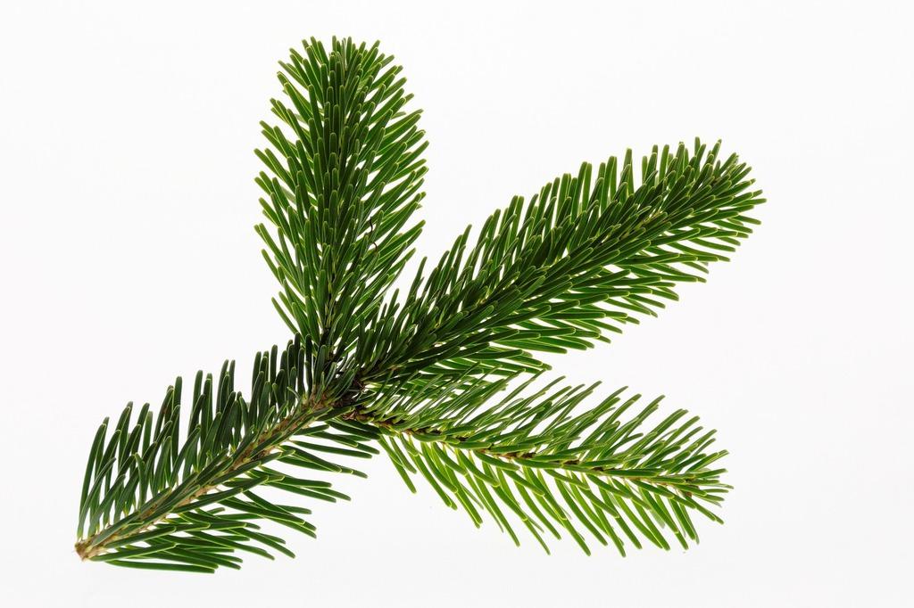Tannen Zuhause Online Kaufen Dein Echter Weihnachtsbaum